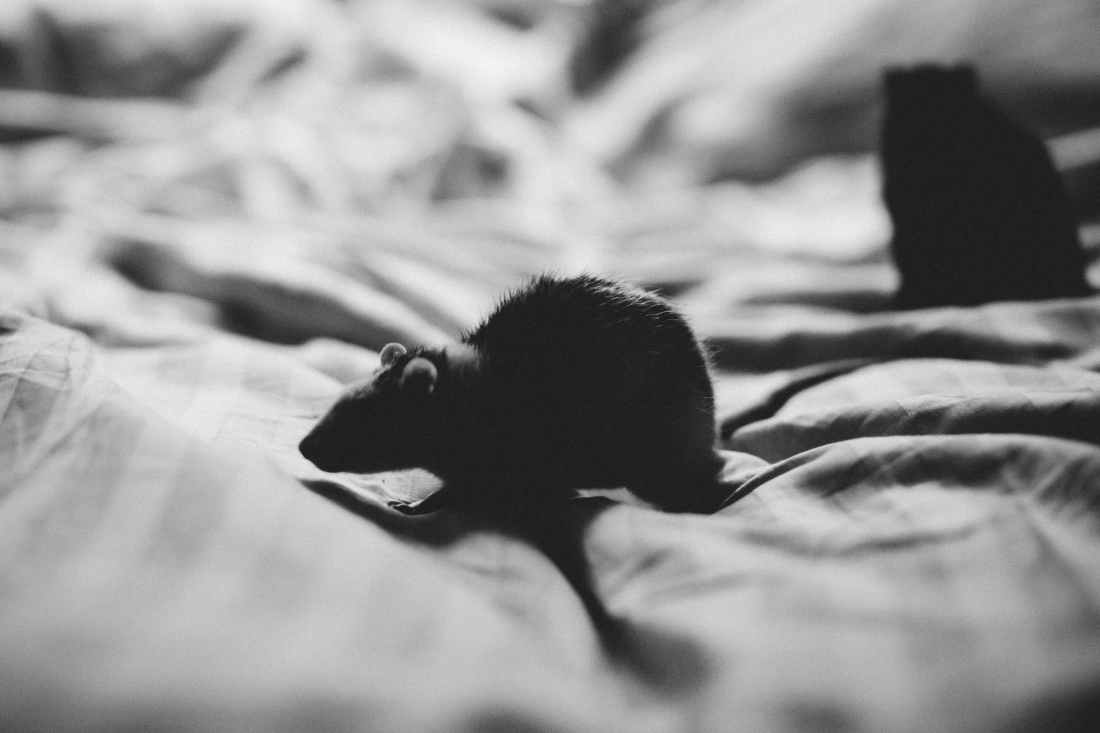grey scale photo of mouse in textile